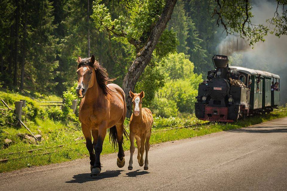 Foto: Adrian Popa / Discover Bucovina